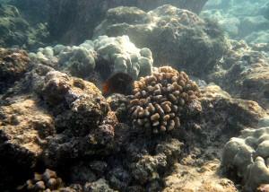 571fish